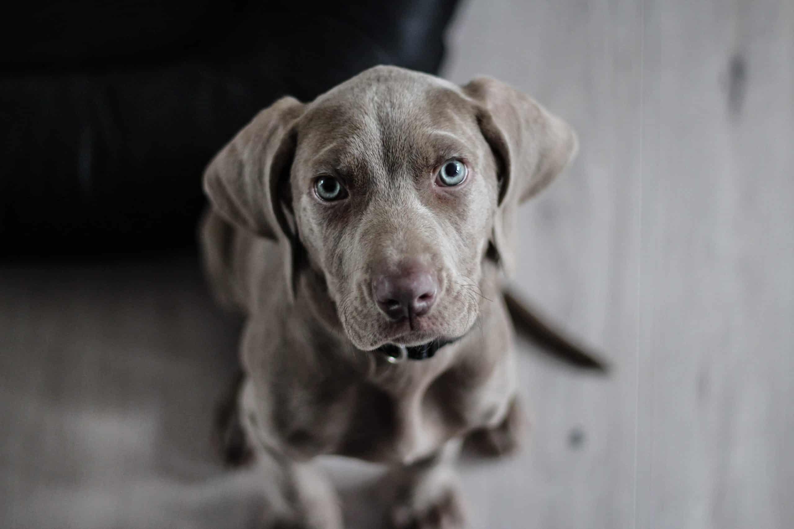 schadevergoeding aansprakelijkheid en smartengeld hondenbeet